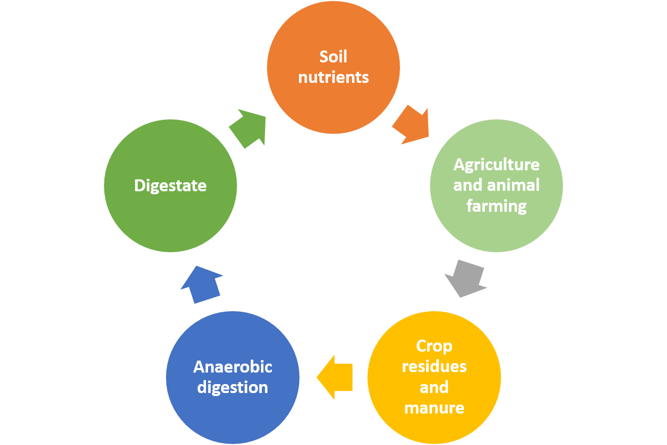 The digestate cycle