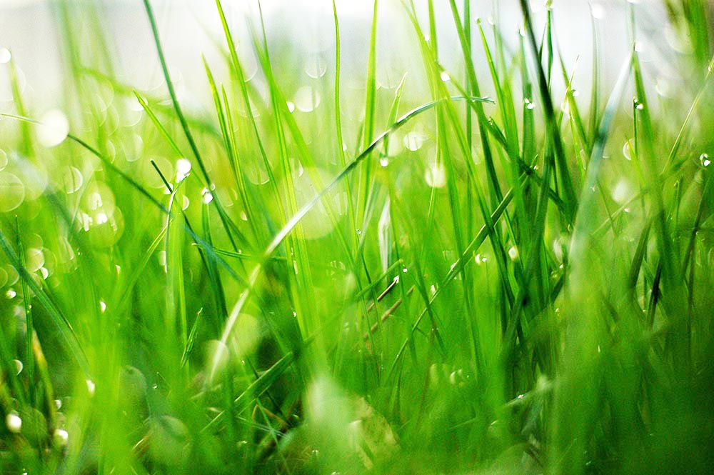 Analysis Of Grass Cellulose Content Of Grass Lignin